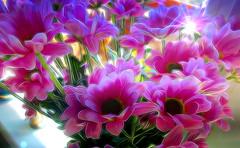 Lit by the Sun (abstractartangel77) Tags: pink flowers sun green ledge windowsill chrysanthemums topaz