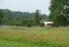 Wunder Natur (dorisgoebel) Tags: trees forest natur meadow wiese poppy wald mohn baume