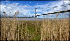 Humber Bridge from Far Ings. (Alan Burkwood) Tags: bridge nature river reeds reserve humber farings
