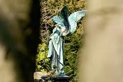 Engel (sigiha1953) Tags: friedhof cemetery statue germany deutschland iso200 fuji fujifilm dusseldorf dsseldorf nordrheinwestfalen nord 2016 statur northcemetery northrhinewestphalia nordfriedhof xpro1 fujifilmxpro1 fujixf50140mmf28rlmoiswr