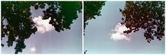 Incontro di nuvole (Maria Evgenidu) Tags: trees film clouds analog 35mm haiku touch experiment meeting cx analogue washingmachine expired analogica chinon pellicola konicacenturia100 touchthesky analogico waitingforyou helios44m4 chinoncx filmisnotdead scaduta pellicolascaduta finchècèpellicolacèsperanza noilofacciamoanalogico konicafilms beanalogic