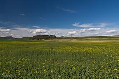 Campos de cultivo. (Jorge Nubla) Tags: paisaje ibero