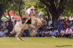Jineteada 1 (pniselba) Tags: horse criollo caballo buenosaires gaucho tradicion provinciadebuenosaires sanantoniodeareco areco jineteada diadelatradicion