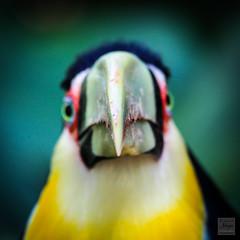 Hi bird !