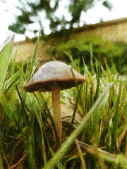 The Fungi (Steve Taylor (Photography)) Tags: newzealand christchurch brown white abstract macro tree green art texture mushroom grass closeup digital fence bush bokeh lawn canterbury fungi fungus southisland toadstool northnewbrighton