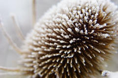 Winter - Sony A7ii 55mm Zeiss prime SOOC - SEL55F18Z A7m2 (SparkleHedgehog) Tags: uk portrait england anna snow cold macro ice up closeup zeiss prime frozen close bokeh sony tube tubes lincolnshire 55mm carl chilly extension alpha sel elsa a7 a7x lincs a7ii a7r a7m2 sel55f18z a7rii a7rm2