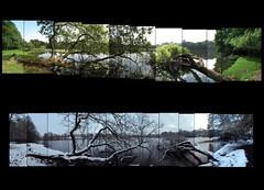 Wollaton Park Lake Summer/Winter (ldjldj) Tags: park nottingham panorama lake david collage dark montage photomontage knight hockney nottinghamshire rises wollaton
