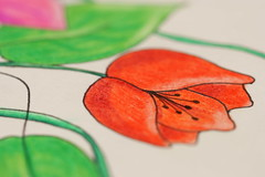 Foto 092 Proyecto 1/365 dias (Sandra SCS) Tags: flor 365 dibujo da proyecto fotografa lpiz proyecto365unaalda