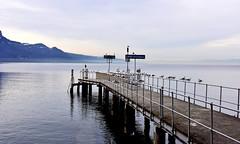 Vevey Plan (Diegojack) Tags: nikon eau lac lman extrieur paysages oiseaux vevey mouettes embarcadre dbarcadre d7200