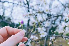 (Helena Cuenca) Tags: flowers winter flower tree photography photo nikon shoot january shooting nikond3200