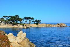 Along Pacific Coast Highway (SLDdigital) Tags: pebblebeach bigsur california slddigital trees ocean luxuryrealestate coastalcities