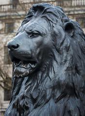 Trafalgar Square Lion (Olympus OMD EM5II & mZuiko 40-150mm F2.8 Pro Zoom) (markdbaynham) Tags: street city urban london zoom capital evil olympus pro metropolis f28 omd csc oly mz londoner londonist m43 zd mft 40150mm mirrorless micro43 microfourthirds micro43rd mzuiko m43rd em5ii