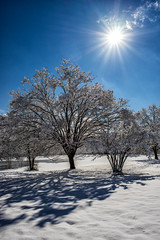 Star light, star bright (sevemiller) Tags: snow nature newjersey southmountainreservation zeiss25f28zf