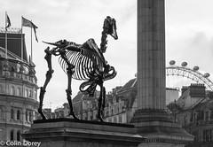 4th Plinth- Trafalgar Square-1.jpg (Colin Dorey) Tags: blackandwhite bw monochrome westminster architecture blackwhite chinese trafalgarsquare londoneye chinesenewyear newyear tourists spectators crowds westend yearofthemonkey haacke hanshaacke gifthorse 4thplinth