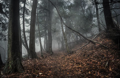 Silence (ScottSimPhotography) Tags: trees winter mist tree leaves japan misty fog forest dark movie japanese woods kyoto track quiet silent darkness walk branches sony hill foggy harrypotter eerie spooky trail mysterious hobbit murky atago gameofthrones a6000