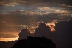 Passing Storm (Dreaming of the Sea) Tags: nikon d5500 d7200 18140mm 2016 sky sunset clouds dusk twilight trees goldensunset gold blue bundaberg 1500v60f