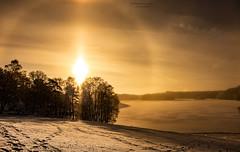Halo Light (Fredrik Lindedal) Tags: halo sky skyline clouds light sunlight lake ice snow trees nikon earth magic fredrik lindedal sweden sverige landscape landskap outdoor sunrise cloud shadows sunrays gold golden sun nature dawn d7200 snowhalo bisol sundog