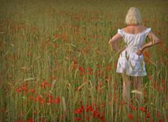 Fields of Barley... (Harleynik Rides Again.) Tags: summer sexy field barley flickr poppies backshot whitedress poppyfield blondeshavemorefun facelessportrait harleynikridesagain