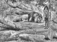 On A Dare (swong95765) Tags: sleeping girl animal zoo kid funny humor lion ridiculous dare mischievous asleep facialexpression