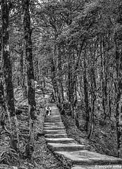 Way to Shikari mata temple (Sougata2013) Tags: bw india forest landscape mandi himachalpradesh shikaridevi nikond7200