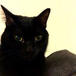 Nina Cat thumbnail