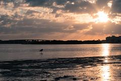 Clearwater Beach Sunset (Emily Kistler) Tags: ocean bridge sunset sun bird beach heron gulfofmexico water silhouette clouds landscape outdoors evening nikon gulf florida d750 clearwater