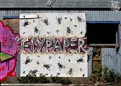 The Dark Roses United (TheDarkRoses84) Tags: denmark graffiti united flypaper tdr hillerød doggiedoe