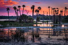 Morning Glow (HD_Keith) Tags: christmas sky usa cloud nature water ecology clouds sunrise landscape scenery skies swamp land environment fl sunrises environmentalism sunup daybreak wetland ecosystem swampland