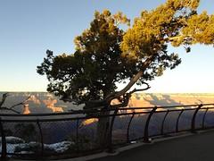 Happy Fenced Friday @ GC. (France-) Tags: arizona usa tree metal fence grandcanyon arbre 275 cloture fencedfriday