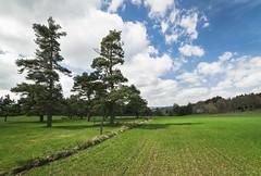 DSC_0613 (EliePics) Tags: france ciel arbres nuages paysage printemps saison hauteloire lechambonsurlignon