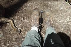 tillamookhike19 (jcravens) Tags: oregon forest hike campground galescreek stateforest tillamookforest