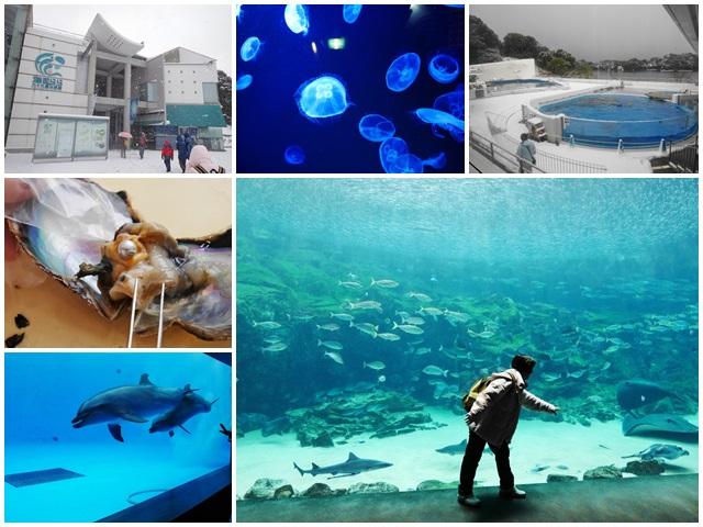 九州長崎旅遊.九十九島水族館.西海國家公園.採集珍珠體驗page