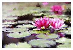 Cezanne in Giverny? (Emet Martinez Photography) Tags: painterly waterlily waterlilies lillypads emetmartinezphotography emetmartinezcom topazimpression cezannebrushstrokes