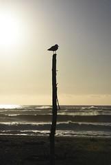 (M J Adamson) Tags: ocean sunset sea newzealand beach nz tasmansea westcoast hokitika westcoastholiday2016
