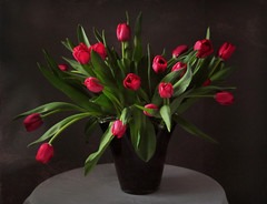 elegant tulips (tonnyc) Tags: stilllife tulips bouquet onblack cuttulips