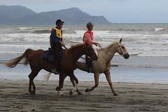 IMG_EOS 7D Mark II201604031920 (David F-I) Tags: horse equestrian horseback horseriding trailriding trailride ctr tehapua watrc wellingtonareatrailridingclub competitivetrailriding sporthorse equestriansport competitivetrailride april2016 tehapua2016 tehapuaapril2016 watrctehapuaapril2016