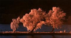 2016 04 17 Baume bei Osterspai 8 IR 680 nm (Mister-Mastro) Tags: trees sun water ir soleil eau wasser arbres filter infrared nm rhine sonne rhein bume infrarot 590
