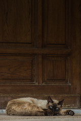 lazy Sunday (y.elbehi) Tags: door wood blue pet brown white house animal cat relax sunday chill