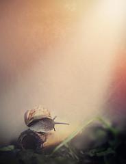 in your light.. (jdewinnaar) Tags: light sun cold garden dark warmth snail