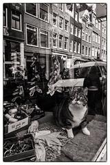 Cat in window @ Amsterdam (PaulHoo) Tags: city urban blackandwhite bw reflection window monochrome amsterdam shop architecture cat lumix store candid nik 2016