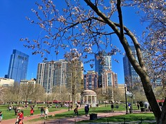 Boston in Springtime ((Jessica)) Tags: flowers sun boston spring downtown massachusetts newengland sunny bostoncommon publicgarden pw