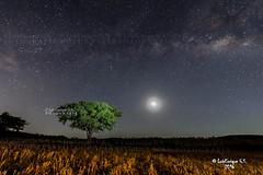Va Lctea, rbol y Luna ( triloga perfecta ) - Puebla - Mxico (Luis Enrique Gmez Snchez) Tags: mxico rbol puebla valctea dadelatierra