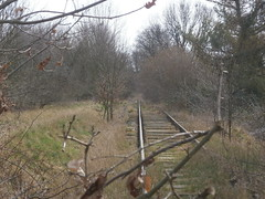 Reste Gterstrecke Teltow 2016 - 49 (Abandoned-Stillgelegt Berlin) Tags: railroad trees tree abandoned train germany deutschland bush track tracks railway bushes bume brandenburg baum gleise busch ballast gleis bahnstrecke stillgelegt trackbed teltow bahndamm schotter schwellen bsche b landbrandenburg betonschwellen bahnbergnge holzschwellen betonschwelle holzschwelle altebahnstrecke gterstrecke stadtteltow ehemaligegterstrecke ehemaligebahnstrecke