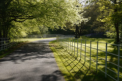 May you always walk in sunshine :) :) :) (Lancashire Lass ...... :) :) :)) Tags: trees green sunshine fence spring woods shadows may lancashire driveway lane preston hff dappledlight ribblevalley haighton squireandertonswood happyfencefriday