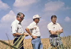 IN THE FIELD -- At center, U of A System Division of Agriculture rice breeder Bobby Wells and, right, Sen. Dale Bumpers in a rice field. Taken. May 1984.  The man on the left is unidentified. (U of A System Division of Agriculture file photo by George Templeton)
