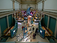 Floating whale, National Museum of Natural History, Washington, DC (ali eminov) Tags: washingtondc smithsonian halls naturalhistory whales museums naturalmuseumofnaturalhistory floatingwhale
