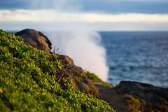 2016.01.04-Maui-059 (c_tom_dobbins) Tags: sunrise hawaii surf waves maui blowhole nakalele