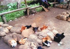 Kohima Market (Nagaland state) dogs for sale for meat (Animal People Forum) Tags: dog india dogs market canine meat dogmeat kohima nagaland livemarket kohimamarket