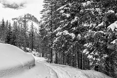 Snowy Road (drugodragodiego) Tags: road wood blackandwhite bw italy snow blackwhite strada pentax lombardia biancoenero breno bosco k3 gaver bagolino vallecamonica vallesabbia provinciadibrescia pentaxda1650mm smcpentaxda1650mmf28edalifsdm valledelcaffaro pentaxiani pentaxk3