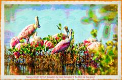 Roseate Spoonbills (NancySmith133) Tags: painterly painting roseatespoonbill photopainting merrittislandnationalwildliferefuge creativephotography paintingthephotograph blackpointwildlifedrive merrittislandnwr centralfloridausa photopaintingsoutdoorscenes